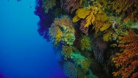 Barriera corallina, la Grande barriera corallina, Australia Paesaggio subacqueo fotografie stock