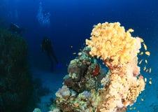 Barriera corallina in Mar Rosso immagini stock libere da diritti