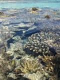 Barriera corallina in Mar Rosso Fotografia Stock