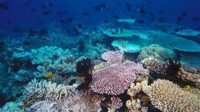 Barriera corallina morta uccisa da riscaldamento globale e da mutamento climatico fotografia stock