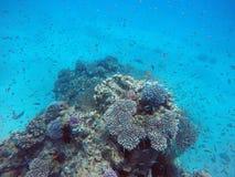 Barriera corallina nel Mar Rosso Immagine Stock