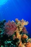 Barriera corallina nel Mar Rosso Immagini Stock