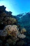 Barriera corallina nell'ambito della superficie Immagine Stock