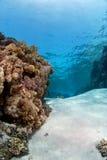 Barriera corallina nell'ambito della superficie Immagine Stock Libera da Diritti