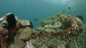 Barriera corallina in Raja Ampat, Indonesia 4k stock footage
