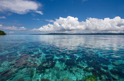 Barriera corallina subacquea Immagine Stock Libera da Diritti