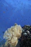 Barriera corallina subacquea Fotografie Stock Libere da Diritti