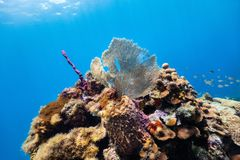 Barriera corallina subacquea Fotografie Stock