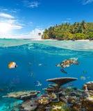 Barriera corallina subacquea con l'isola tropicale Fotografia Stock Libera da Diritti