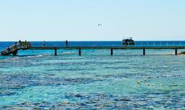 Barriera corallina sul Mar Rosso Eilat fotografia stock libera da diritti