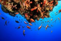Barriera corallina tropicale Fotografia Stock Libera da Diritti