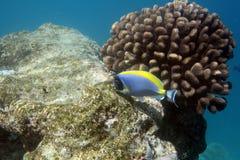 Barriera corallina tropicale Fotografie Stock