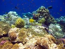 Barriera corallina tropicale in Mar Rosso fotografia stock libera da diritti