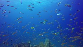 Barriera corallina tropicale subacquea video d archivio