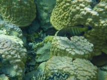 Barriera corallina variopinta con i pesci Fotografia Stock