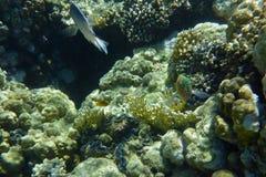 Barriera corallina variopinta con i pesci Fotografia Stock Libera da Diritti