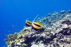 Barriera corallina variopinta con i pesci esotici in mare tropicale Fotografia Stock