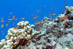 Barriera corallina variopinta con i pesci esotici in marino-underwate tropicale Immagini Stock