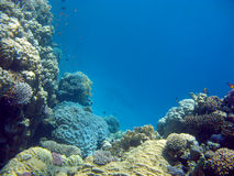 Barriera corallina variopinta con i pesci esotici su un fondo del mare tropicale Fotografia Stock Libera da Diritti