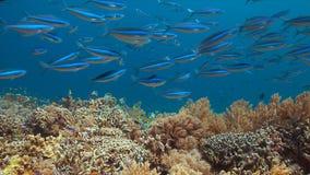 Barriera corallina variopinta con il pesce di abbondanza Fotografie Stock Libere da Diritti