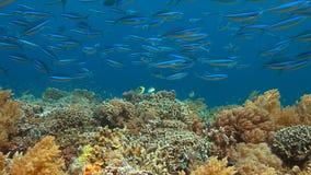 Barriera corallina variopinta con il pesce di abbondanza Fotografia Stock Libera da Diritti