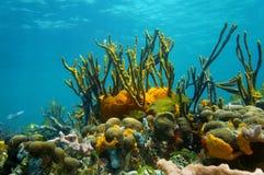 Barriera corallina variopinta di vita marina di paesaggio subacqueo Immagini Stock
