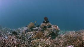 Barriera corallina variopinta 4k di Raja Ampat Indonesia stock footage