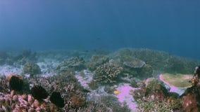 Barriera corallina variopinta 4k di Raja Ampat Indonesia archivi video