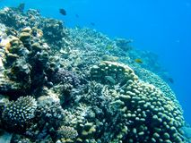 Barriera corallina vuota immagine stock
