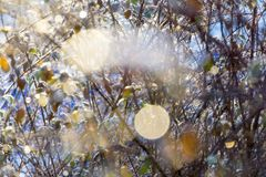 Barriera di inverno con le riflessioni soleggiate fotografia stock