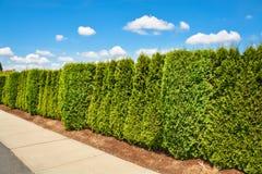 Barriera di verde lungo lungo il marciapiede concreto sul fondo del cielo blu Fotografia Stock