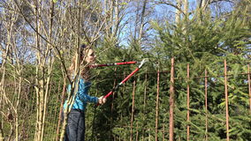 Barriera femminile dell'albero di abete della guarnizione dell'uomo del giardiniere con i tagli rossi 4K video d archivio