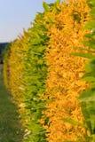 Barriera giallo verde Immagini Stock Libere da Diritti
