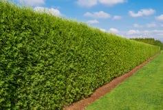 Barriera lunga verde con un fondo del cielo blu e del prato inglese immagine stock libera da diritti