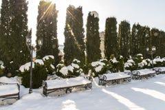 Barriera sempreverde del thuja occidentalis colonnare nell'iarda innevata, inverno Abbellendo, servizi di giardinaggio fotografie stock libere da diritti