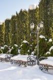 Barriera sempreverde del thuja occidentalis colonnare nell'iarda innevata, inverno Abbellendo, servizi di giardinaggio immagini stock