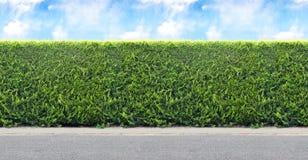 Barriera verde dalle piante sempreverdi con la strada della ghiaia e del cielo Sea fotografia stock libera da diritti
