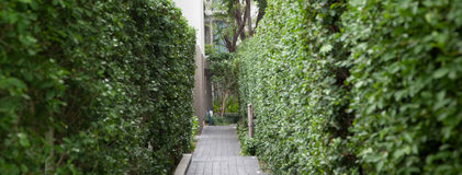 Barriera verde fra la via Fotografia Stock