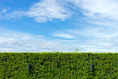 Barriera verde naturale con il fondo del cielo blu immagini stock libere da diritti