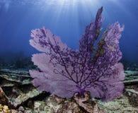 Barriere coralline nordamericane Immagini Stock Libere da Diritti