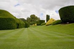 Barriere e prato inglese del Topiary immagine stock libera da diritti