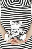Barriga da mulher gravida no vestido descascado com brinquedo da zebra Fotografia de Stock