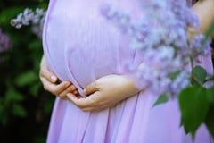 Barriga de uma mulher gravida fotografia de stock