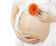 Barriga grávida, estômago da mulher da gravidez com flor Imagens de Stock Royalty Free