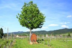 Barril de vino Imagenes de archivo