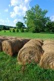 Barriles de heno en un campo verde Imagen de archivo libre de regalías