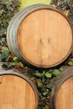 Barriles de vino Fotografía de archivo