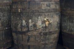 Barriles de vino sucios viejos Imágenes de archivo libres de regalías