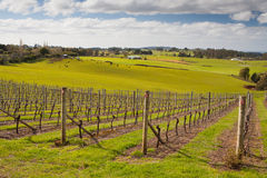 Barringwood Park Winery Royalty Free Stock Photos