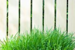 Barrière en bois et herbe verte fraîche Photo libre de droits